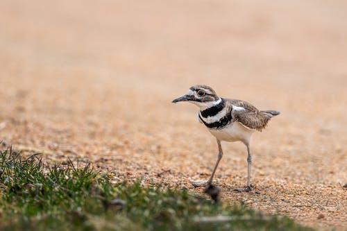 Predatory bird with pointed beak and ornamental plumage strolling on thin legs on shabby land near grass
