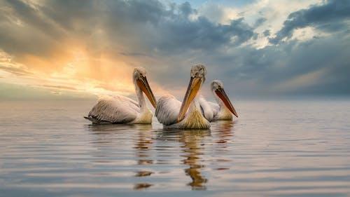 Ảnh lưu trữ miễn phí về bầu trời tươi đẹp, biển, bình minh, bờ biển
