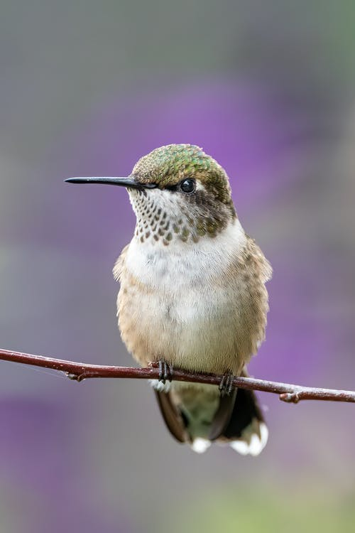 Closeup of small attentive bird with pointed beak and ornamental plumage sitting on tree twig