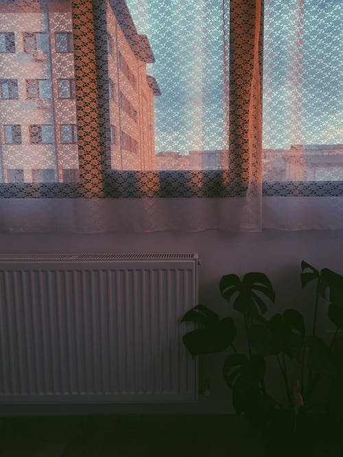 Window in apartment room covered with light white curtains near big houseplant in early evening