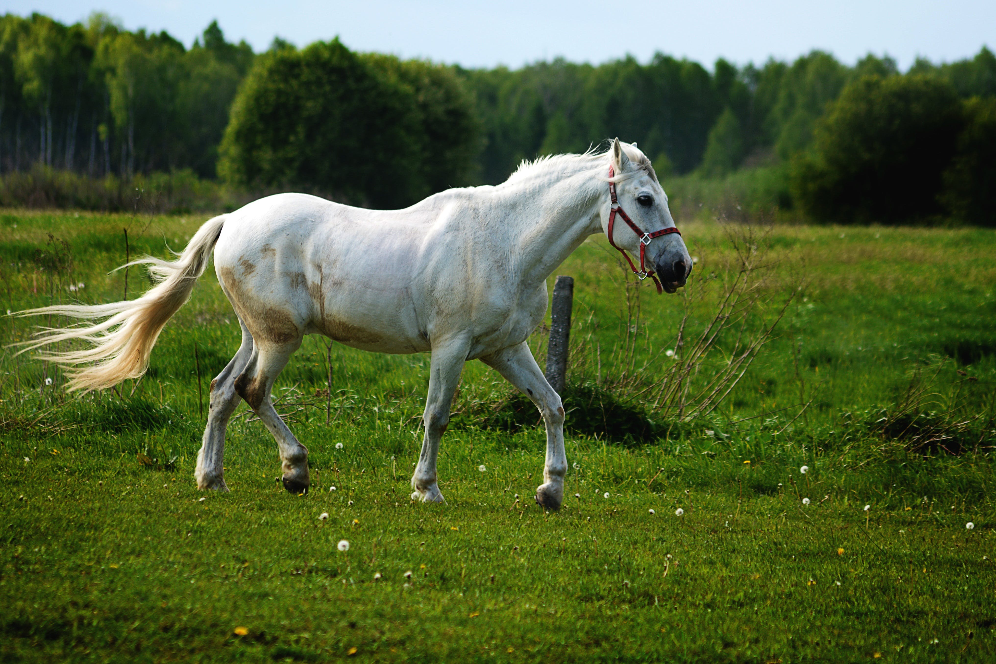 Fotos de stock gratuitas de animal, blanco, caballo, caballo blanco