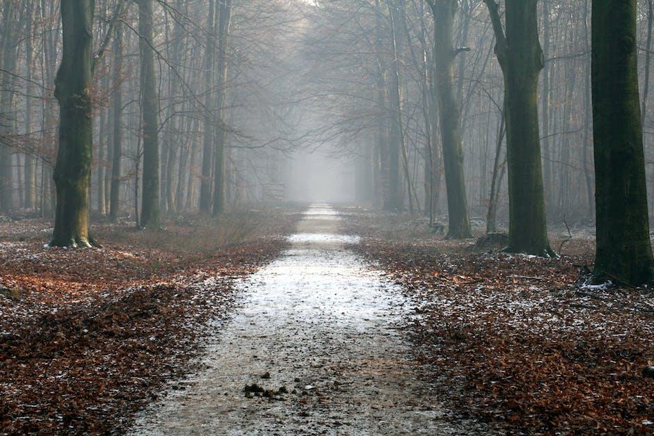 autumn, calm, creepy