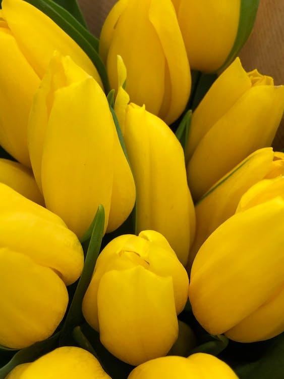 Romantic bouquet of delicate yellow tulips