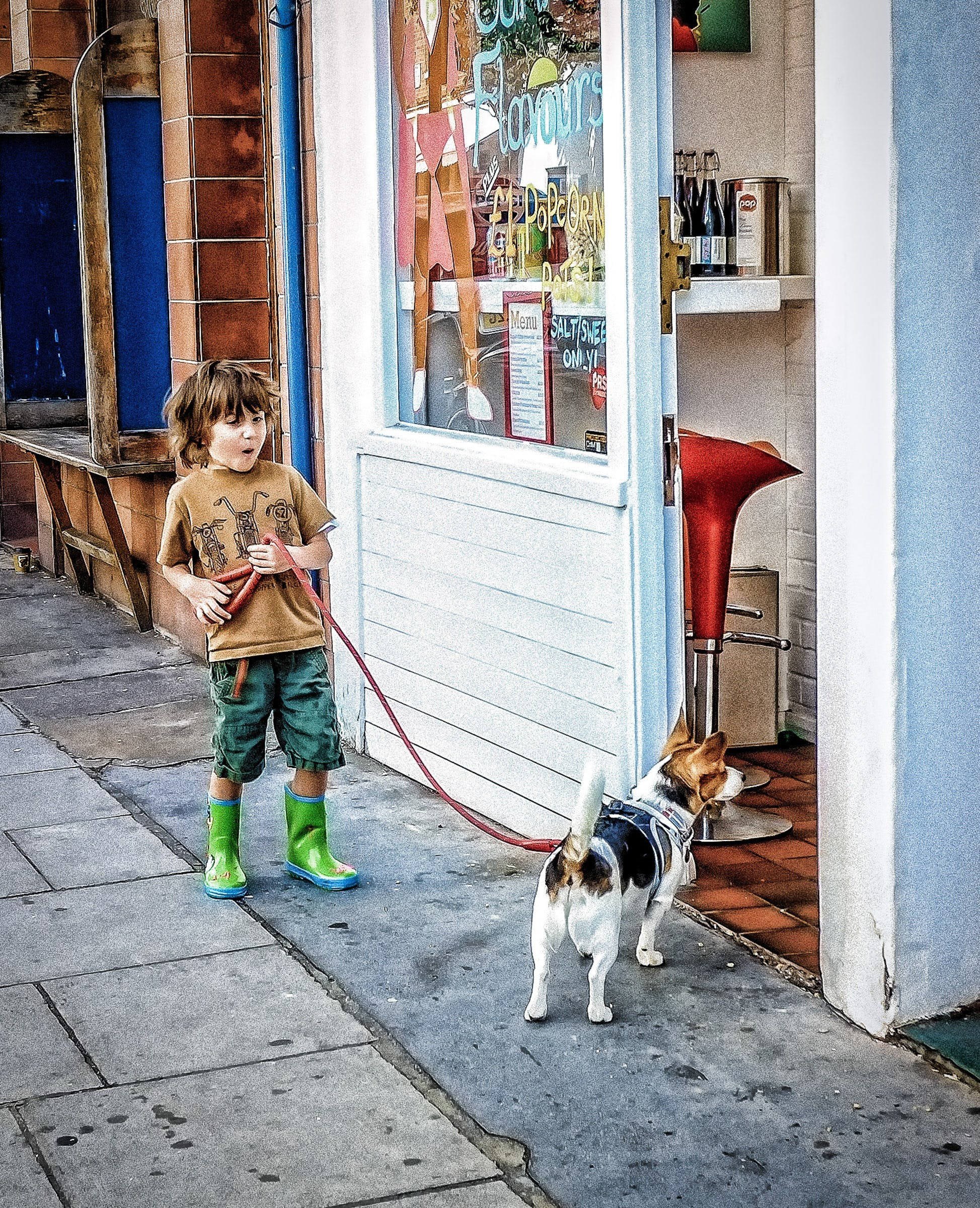 Free stock photo of city, dog, street market, young