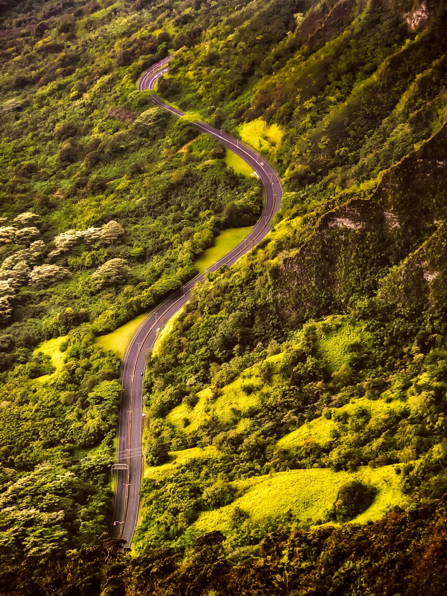 Aerial View of Road and Forest
