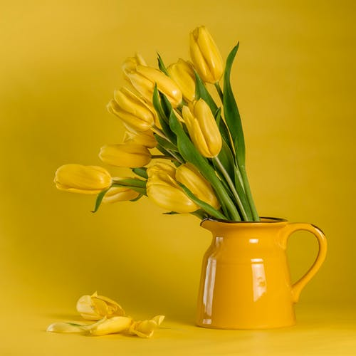 Yellow Tulips in Yellow Ceramic Vase