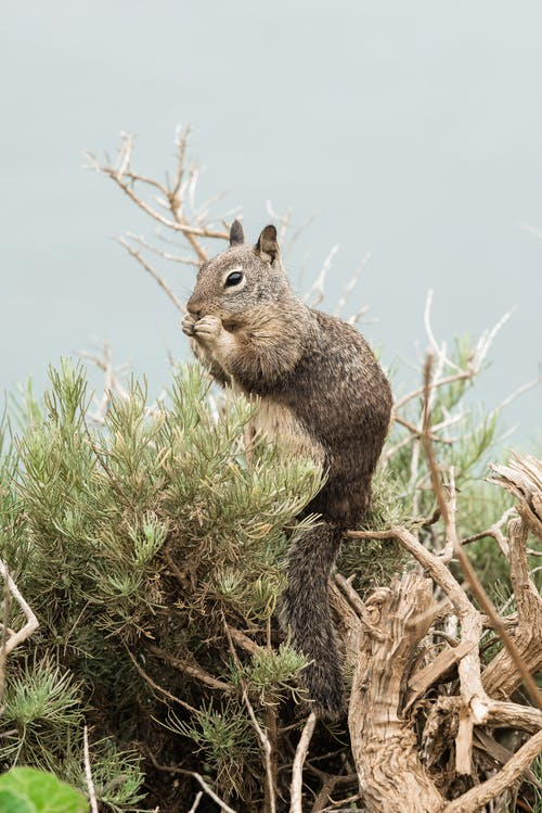 Brown Squirrel On A Tree