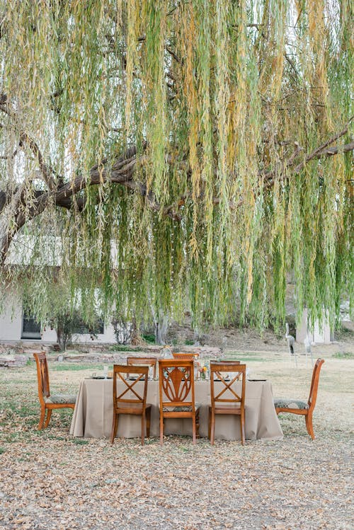 Brown Wooden Chairs and Tables Under A Tree