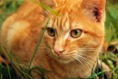 Ảnh lưu trữ miễn phí về Chân dung, cỏ, con mèo, con vật