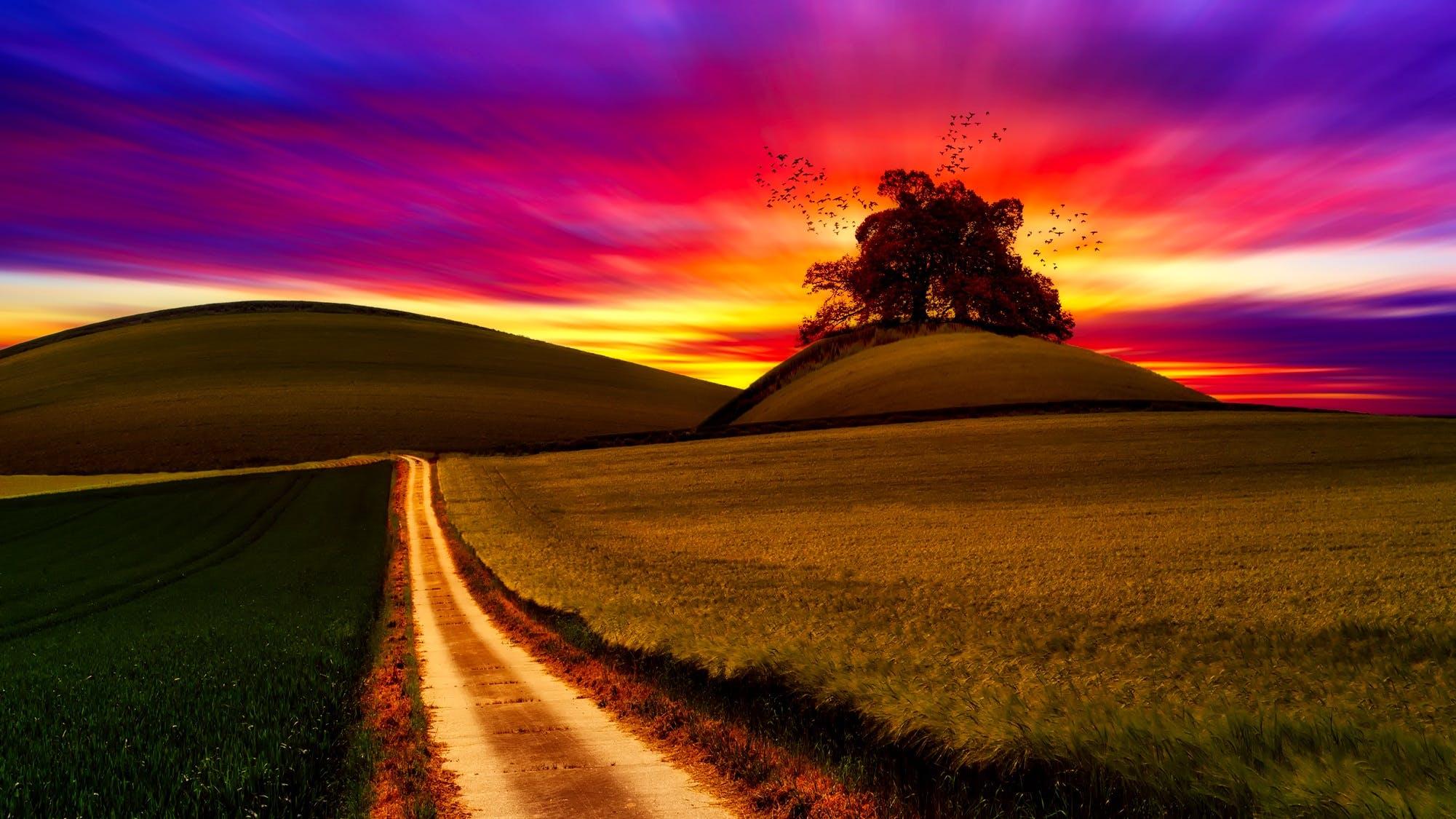 Безкоштовне стокове фото на тему «барвистий, дерево, дорога, Захід сонця»
