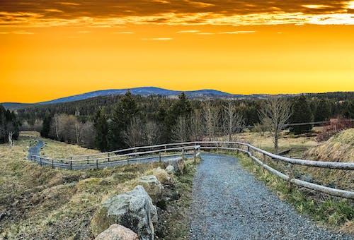 Základová fotografie zdarma na téma chodník, hora, idylický, les
