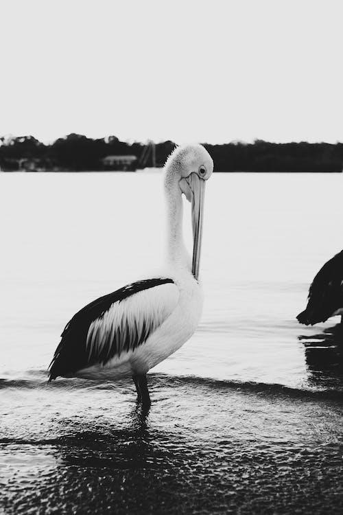 คลังภาพถ่ายฟรี ของ กลางแจ้ง, การถ่ายภาพสัตว์, การอพยพ, การโยกย้าย