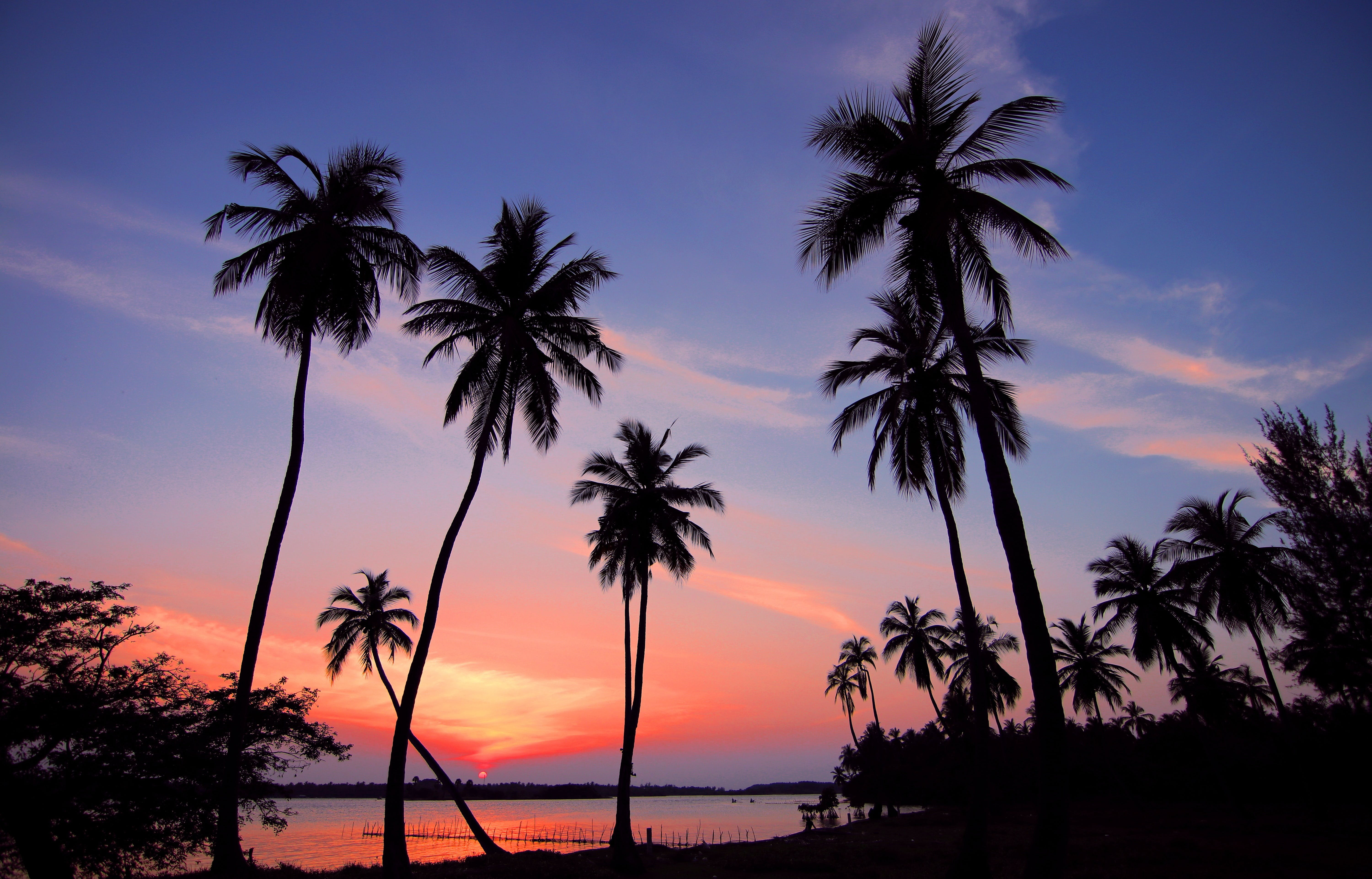 Silhouette of Palm Trees Near Shoreline