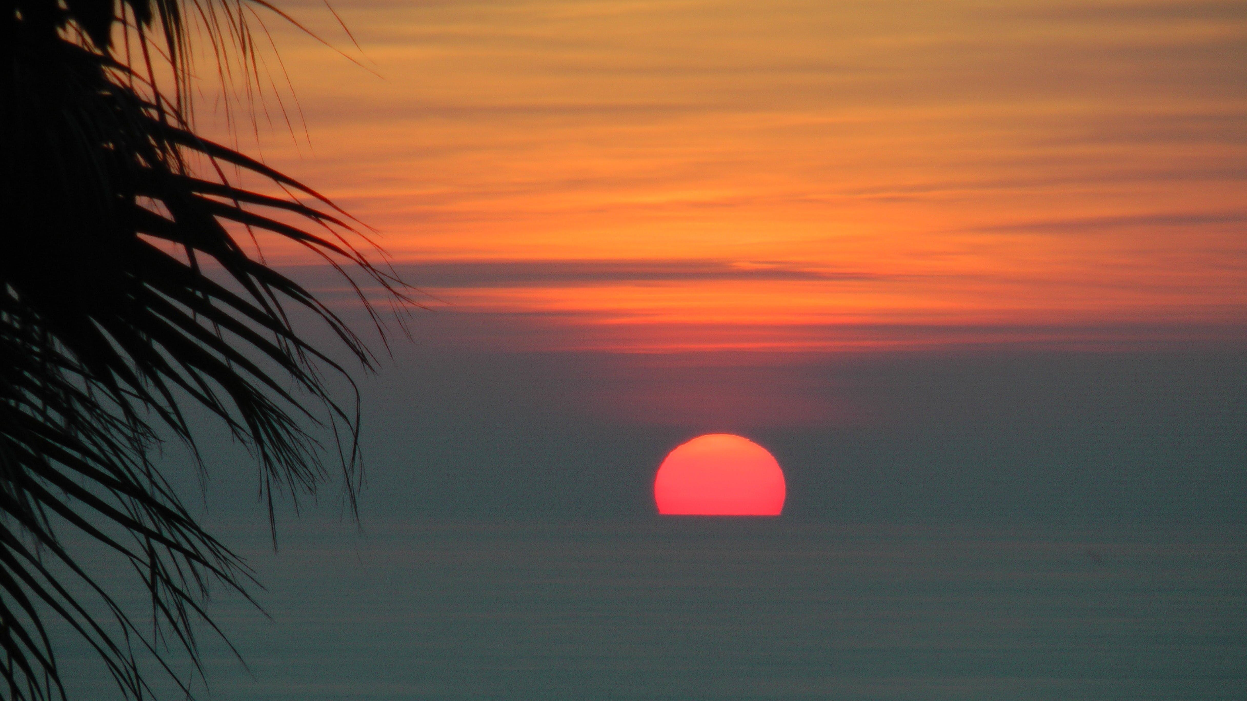 Free stock photo of sea, sunset, palm, afterglow