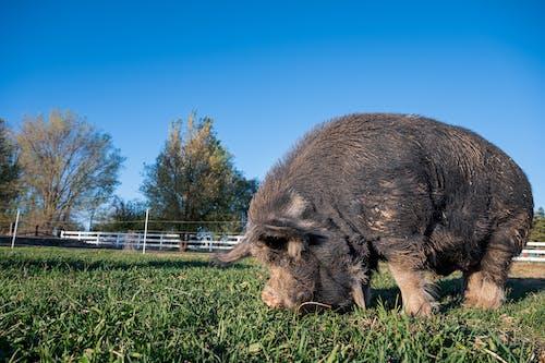Základová fotografie zdarma na téma denní světlo, domácí, farma, fotografování zvířat