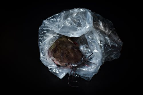 A Catfish Inside A Plastic Bag