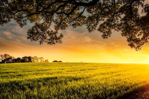 Fotos de stock gratuitas de agricultura, amanecer, anochecer, arboles