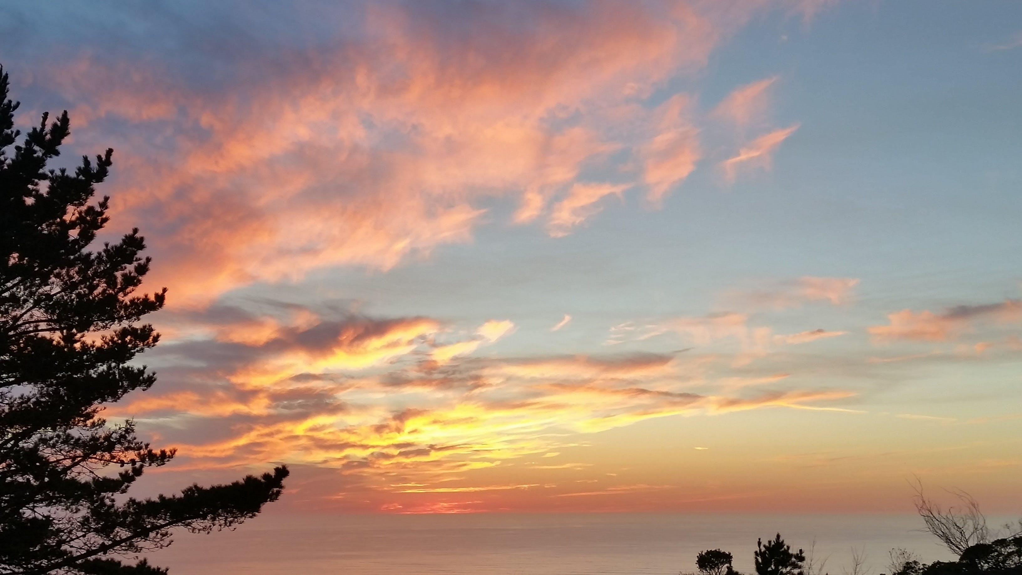 คลังภาพถ่ายฟรี ของ ชายทะเล, ดวงอาทิตย์, ตะวันลับฟ้า, ต้นไม้