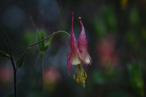 Darmowe zdjęcie z galerii z delikatny, deszcz, dziki, flora