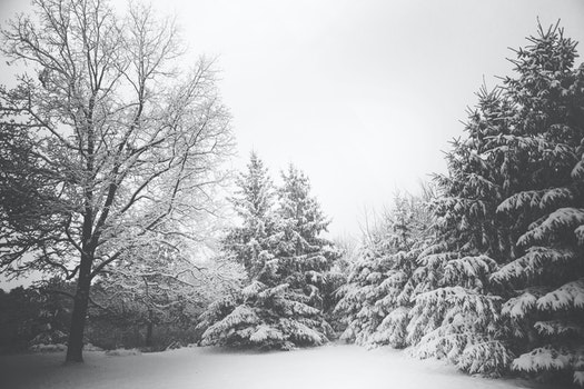 Free stock photo of snow, landscape, trees, winter