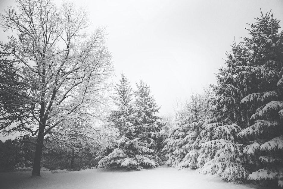 branches, landscape, snow