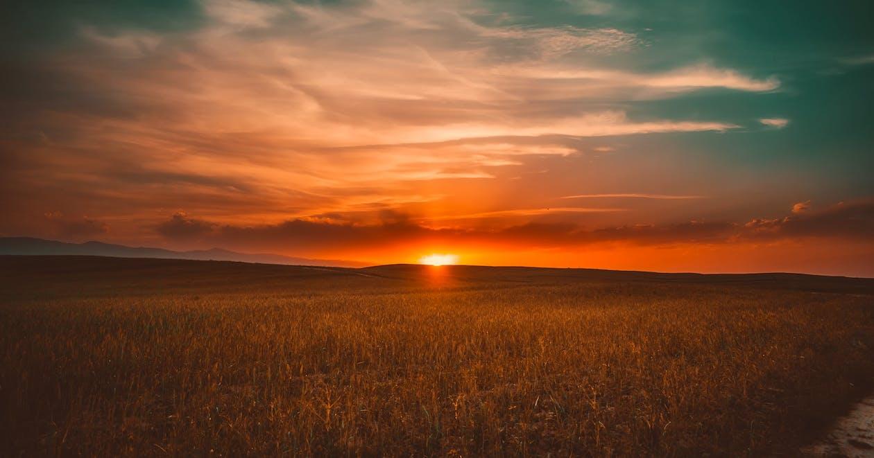 Grass during Sunset