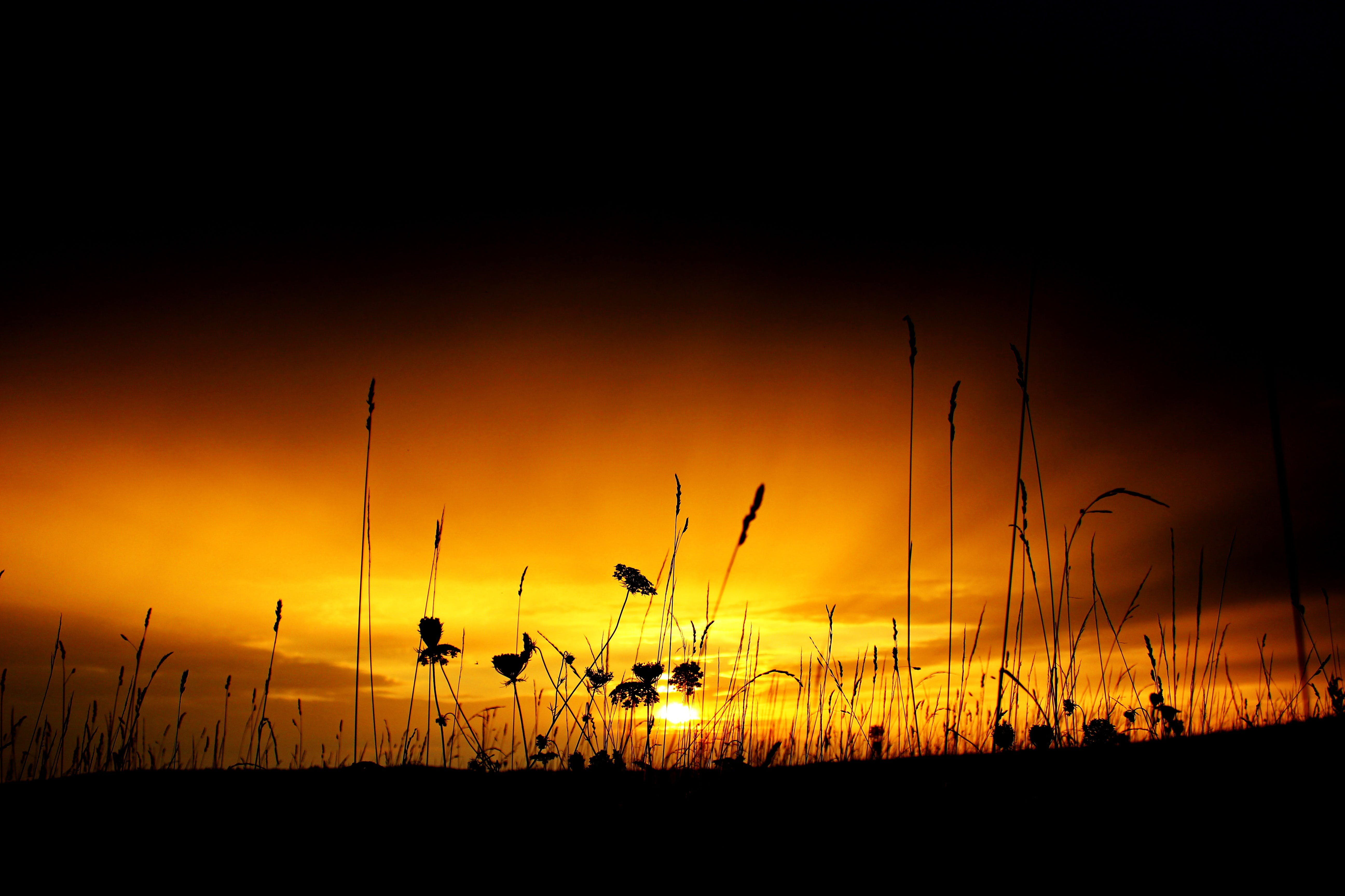 Gratis lagerfoto af bagbelyst, græs, himmel, idyllisk