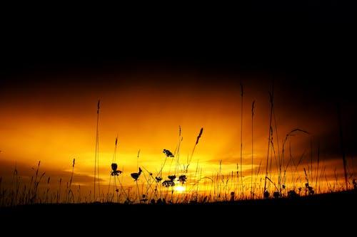 คลังภาพถ่ายฟรี ของ กก, งดงาม, ตะวันลับฟ้า, ท้องฟ้า