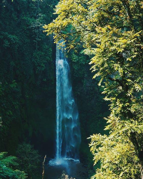 Photos gratuites de arbres, asie, bois