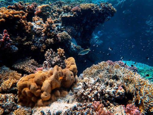 Foto d'estoc gratuïta de aigua, animals, animals aquàtics, aquàtic