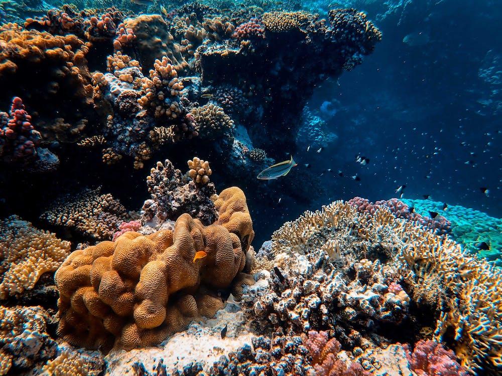 Photo Of Marine Life