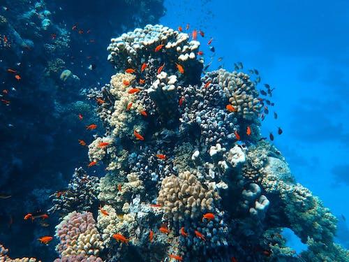 Foto d'estoc gratuïta de aigua, animal, animals aquàtics, aquàtic