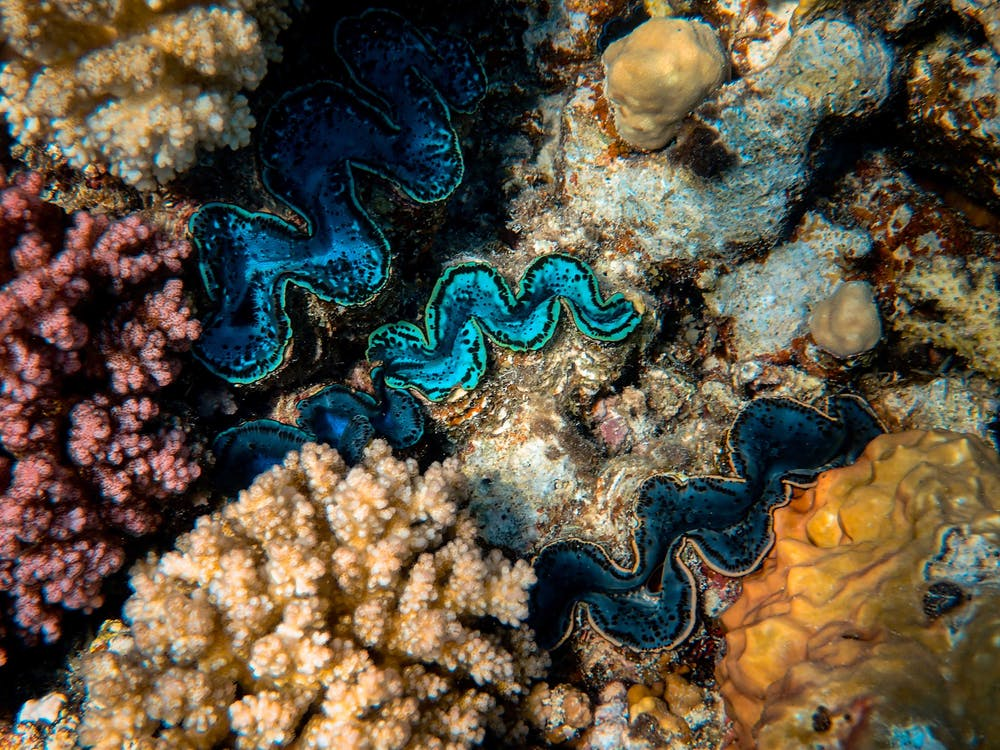 Close-Up Photo Of Coral Reef