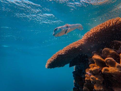Kostenloses Stock Foto zu biologie, koralle, korallen