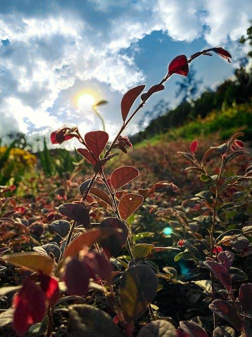 Free stock photo of beautiful, bokeh, plants