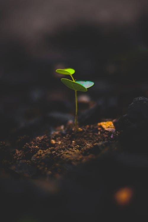 Macro Photography Of Plant