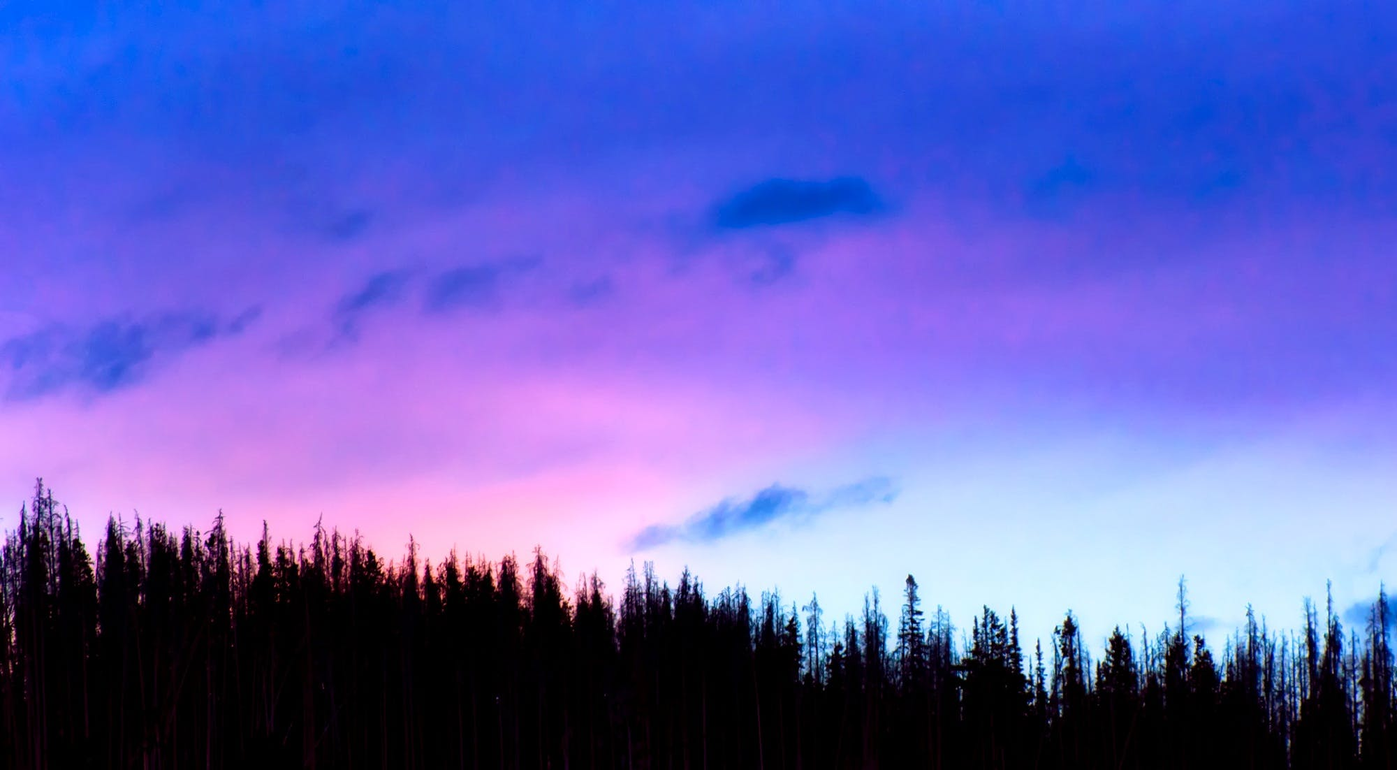 Silhoutte of Trees during Sunset
