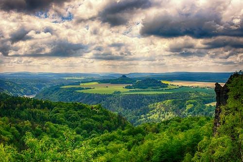 Ingyenes stockfotó békés, ég, erdő, fák témában
