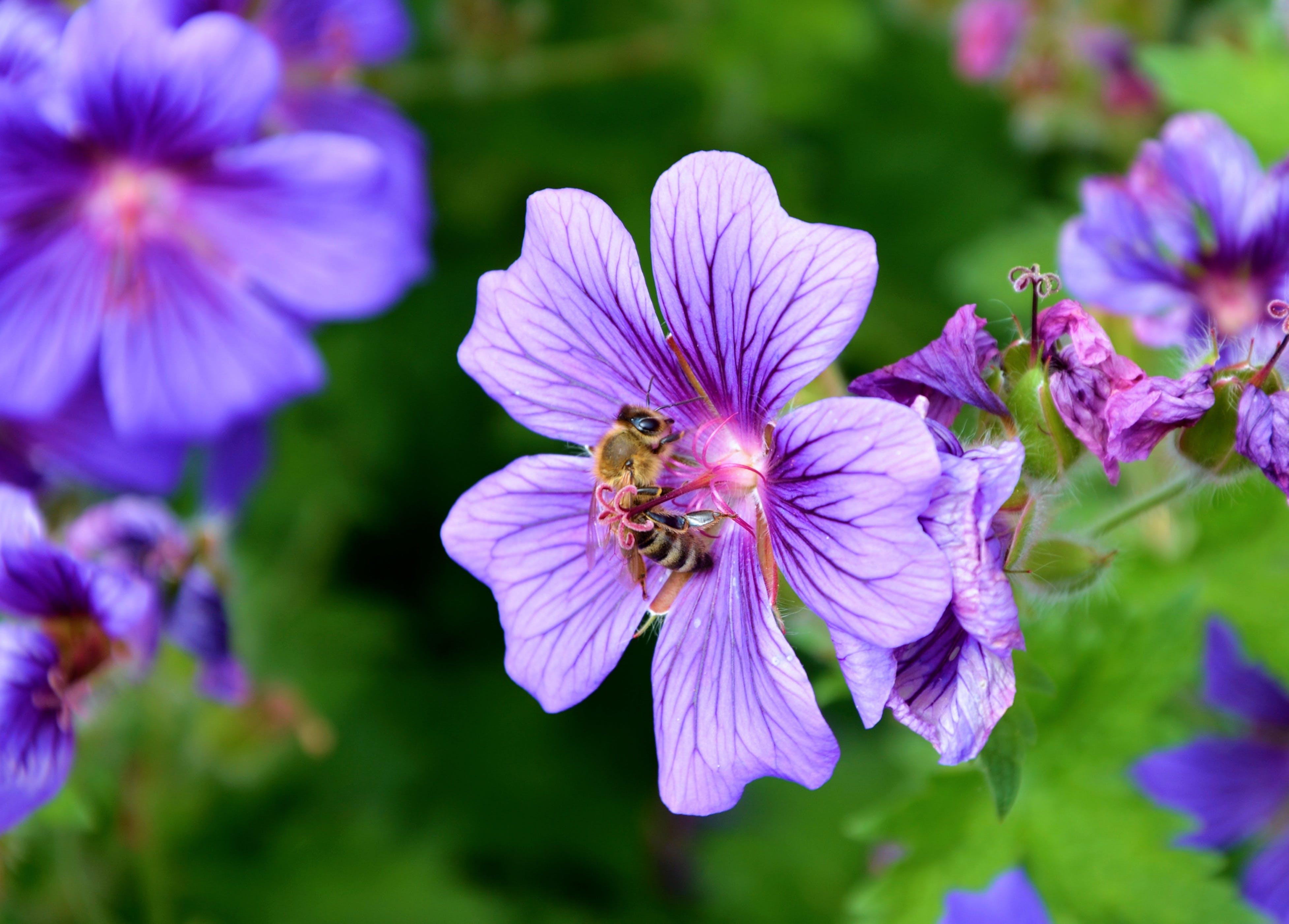 arı, bitki örtüsü, bitkiler, böcek içeren Ücretsiz stok fotoğraf