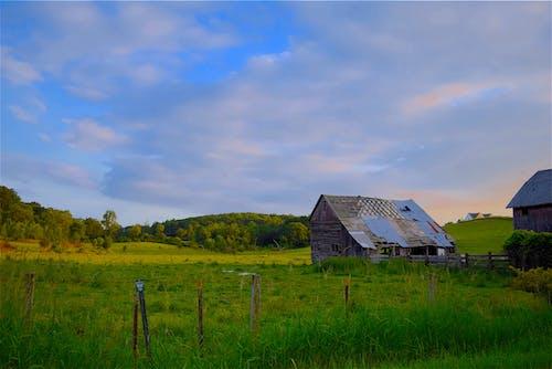 ファーム, フィールド, フェンス, 夏の無料の写真素材