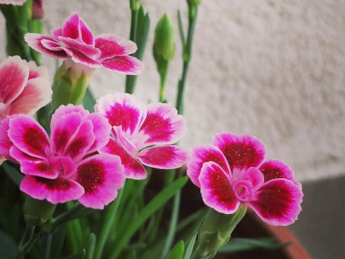 Free stock photo of beautiful flowers, bed of flowers, blooming flowers, bunch of flowers