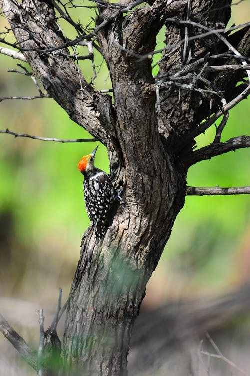 Close-Up Photo Of Woodpecker Perched On Tree