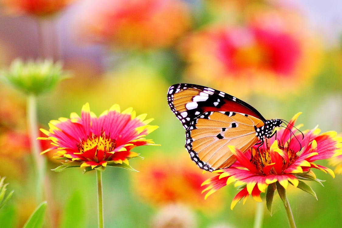 Butterfly Perched On Flower Free Stock Photo