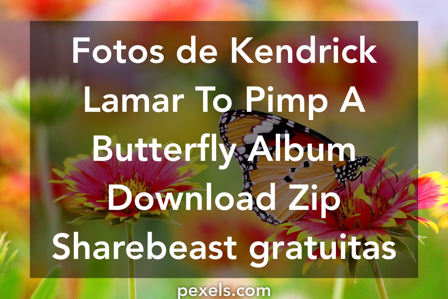 to pimp a butterfly download zip sharebeast
