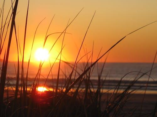 光, 地平線, 夏天, 太陽 的 免费素材照片