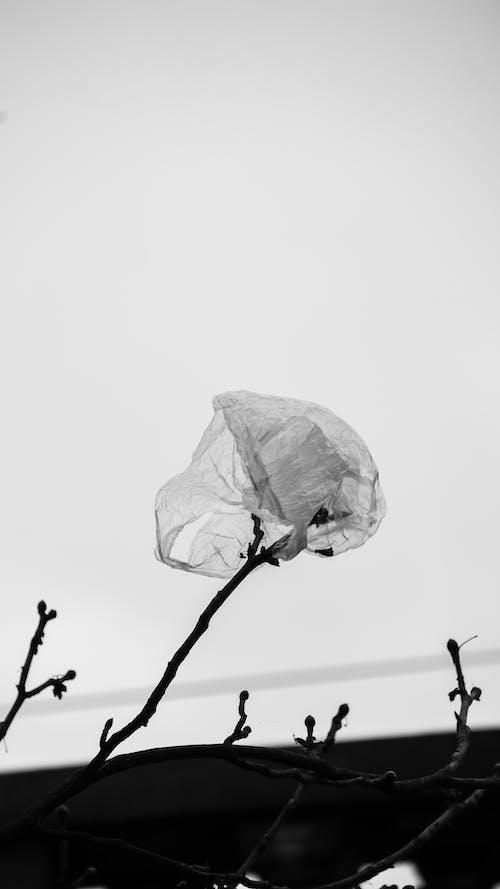 Plastic bag waving on leafless tree branch