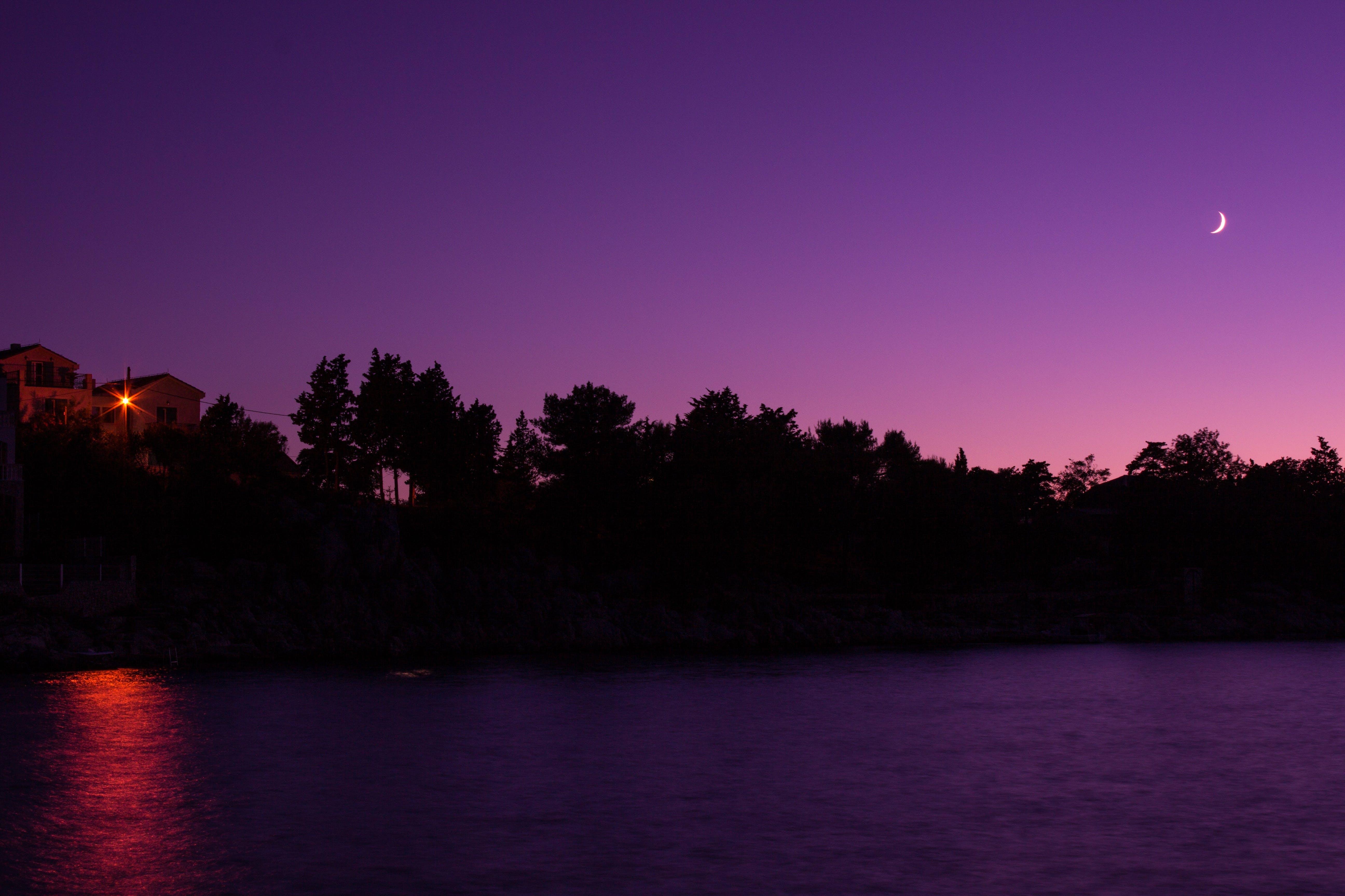 Tree Silhouette Under Purple Sky during Night