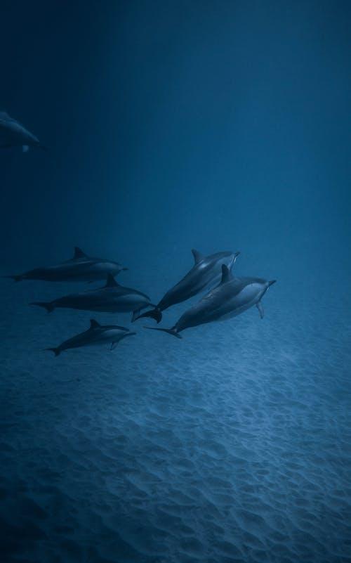 Fotos de stock gratuitas de agua, animal marino, bajo el agua, banco de peces