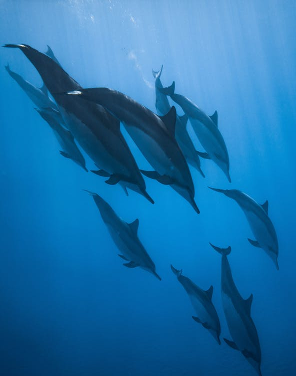 Photo Of Dolphins Swimming Together