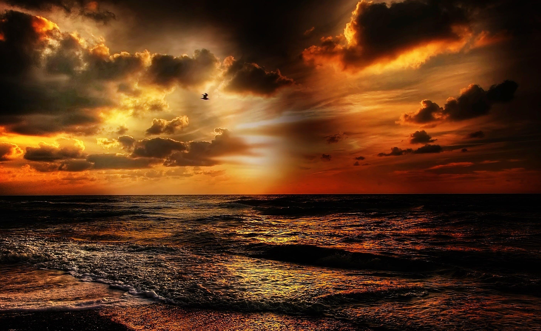 bølger, guld, hav